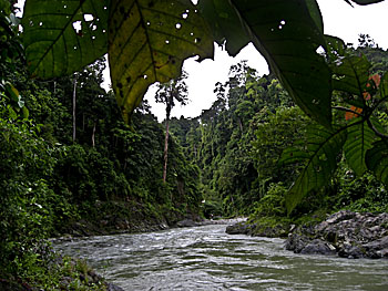 Asienreisender - Rainforest at Bohorok River, Sumatra