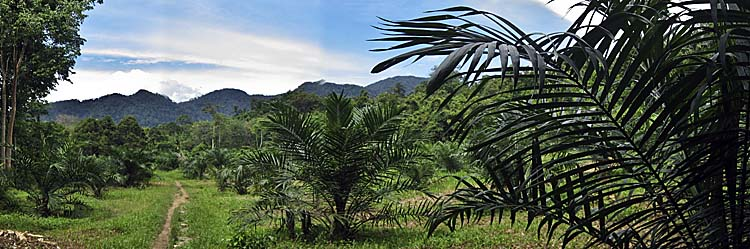 Asienreisender, Palm Oil Plantation