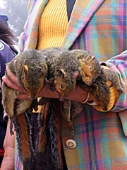 Squirrels on a Laotian Market by Asienreisender