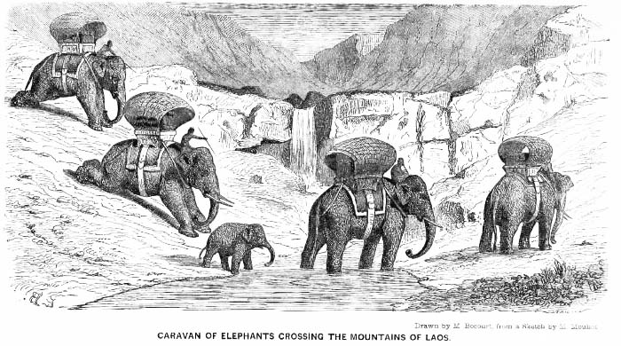 Caravan of Elephants in Laos
