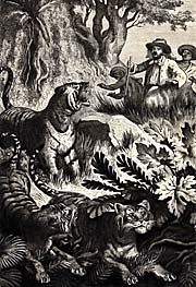 Junghuhn's encounter with a Javanese Tiger