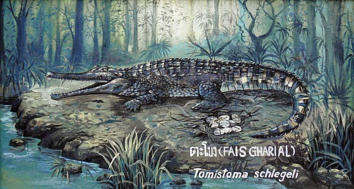 Painting of a Sunda Gharial at Dusit Zoo, Bangkok by Asienreisender