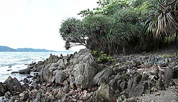 Mangrove Coast on Rabbit Island / Koh Tonsay by Asienreisender