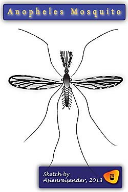 Anopheles Mosquito, Sketch by Asienreisender 2013