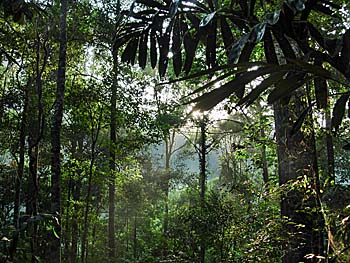'Inside the Tropical Rainforest of Khao Sok National Park' by Asienreisender
