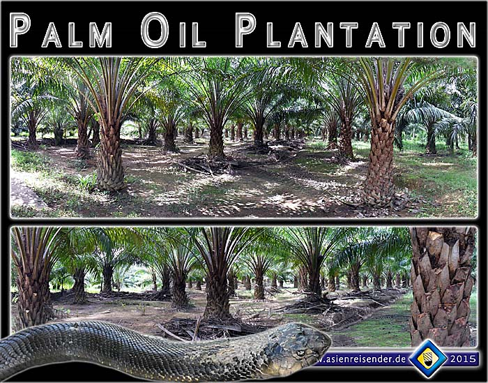 Palm Oil Plantations In Southeast Asia By Asienreisender