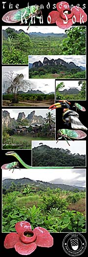 Thumbnail 'Photocomposition Khao Sok National Park / Thailand' by Asienreisender