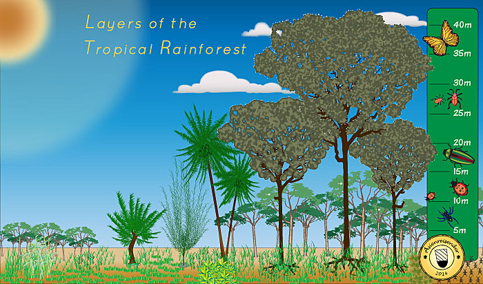 'The Layers of the Tropical Rainforest' by Asienreisender