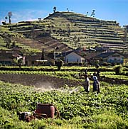 'Use of Pesticides on the Dieng Plateau' by Asienreisender