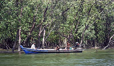 'Fishing Boat in the Mangrove Forests of Ranong' by Asienreisender