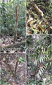 'Animal Traps in the Cardamom Mountains' by Asienreisenderr