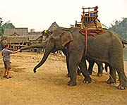 'Elephant is Shacking Hands with Tourist in the Elephant Camp' by Asienreisender