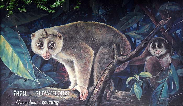 'Painting of a Slow Loris at the Outer Walls of Dusit Zoo | Bangkok | Thailand' by Asienreisender