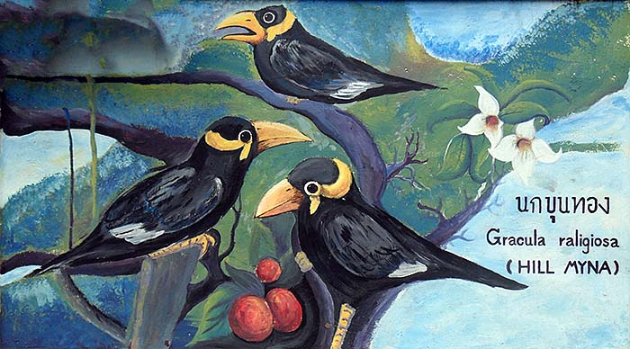 'Painting of Some Hill Mynas on the Outer Walls of Dusit Zoo | Bangkok' by Asienreisender