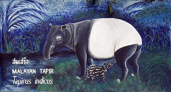 'Painting of a Malayan Tapir with Calf | Dusit Zoo | Thailand' by Asienreisender